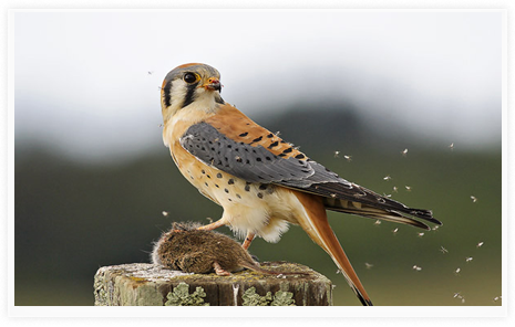 Kestrel-Capital-Group-Kestrel